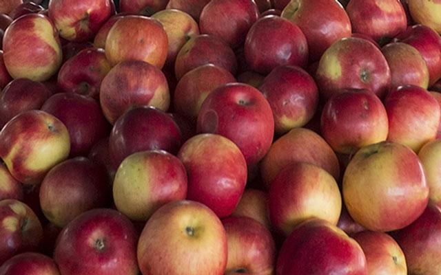 Tarta de manzanas caseras