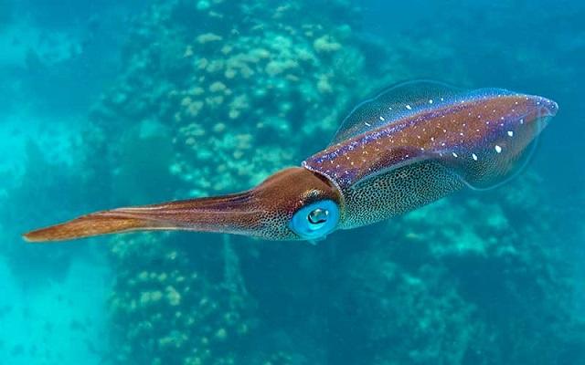 Anillas de calamar guisadas