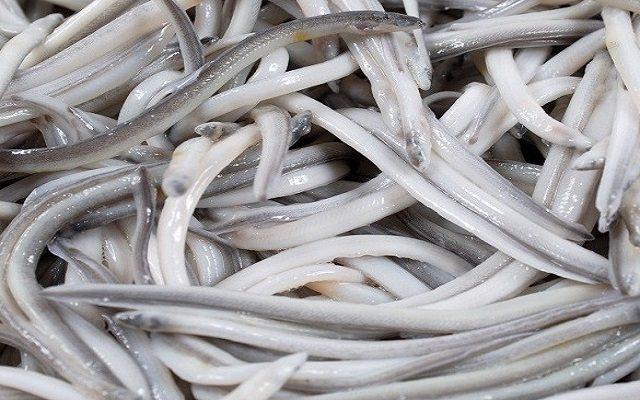 Sopa de langostinos y angulas
